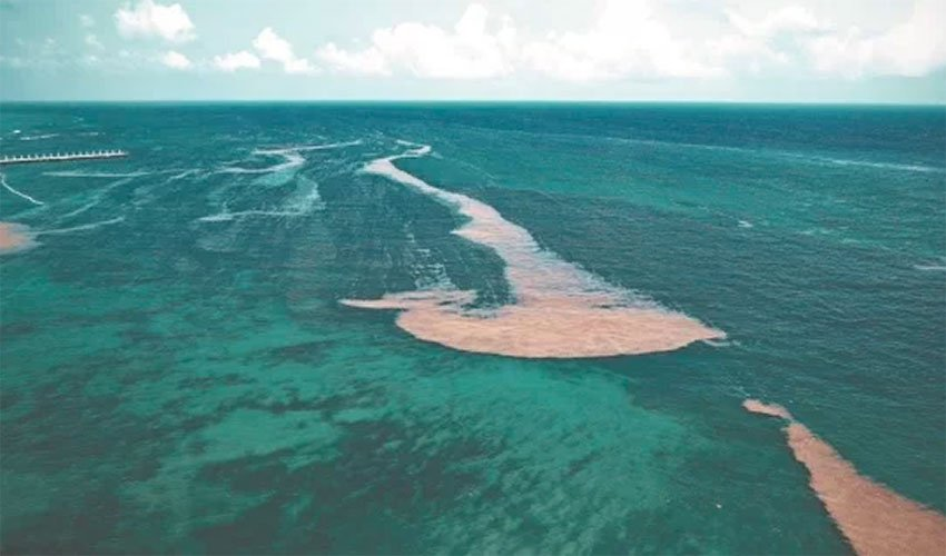 'Islands' of sargassum in the Caribbean Sea, Mexico-bound.