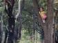 2—aa-Climbing-trees-comes-naturally-by-Chuy-Moreno