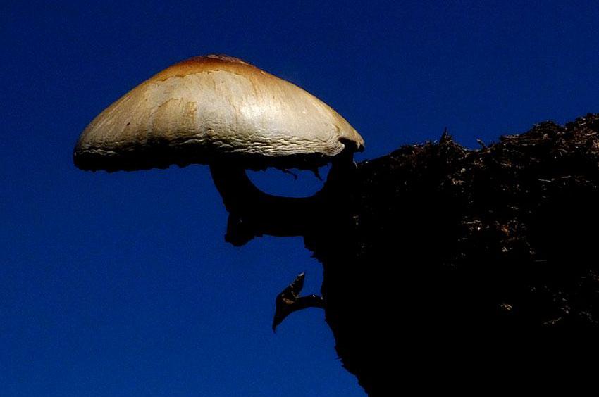 6—Mushroom-in-the-sky