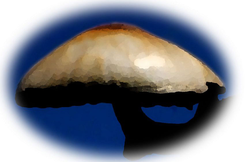 7—Mystic-Magic-Mushroom
