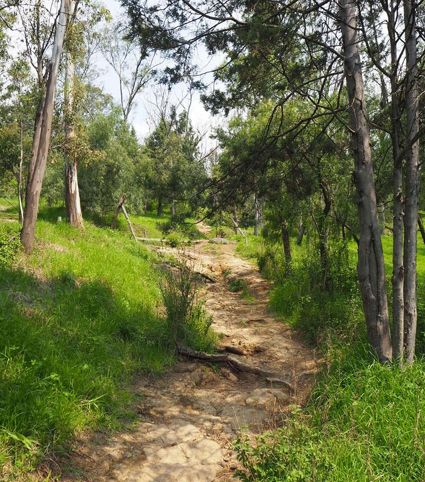 The lush trails of Cerro de la Estrella National Park.