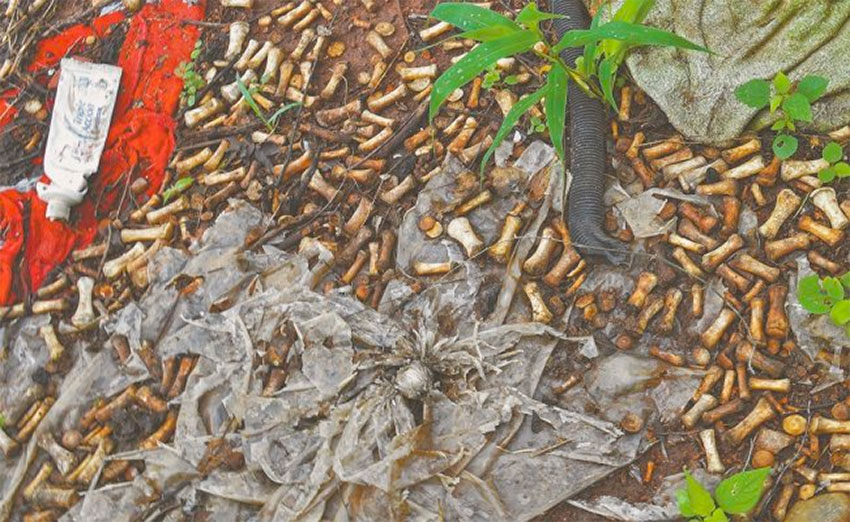 Thousands of bones were found in Culiacán.
