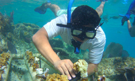 A diver plants coral in Quintana Roo.
