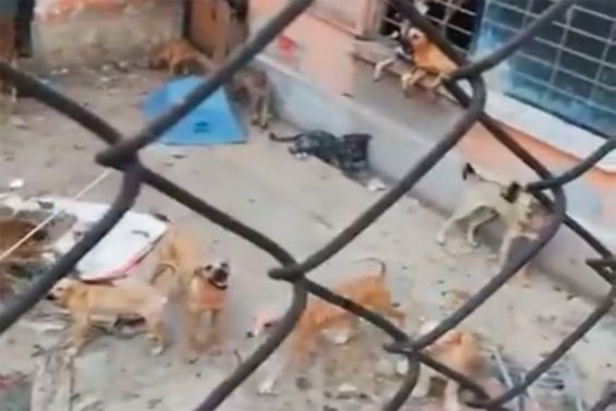 Some of the 50 dogs rescued by authorities.