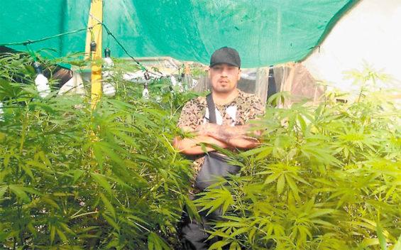 Hernández and a Mexico City marijuana plantation.