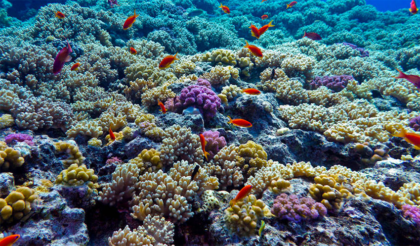 Coral reefs are 'sending a message:' scientist