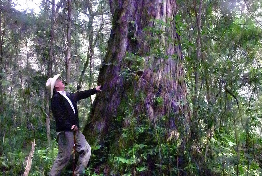 Richard Gresham checks out a 300-year-old tree in Manantlán.