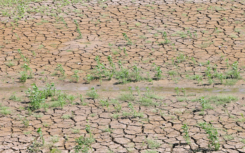 Drought conditions are the worst in Veracruz and Oaxaca.