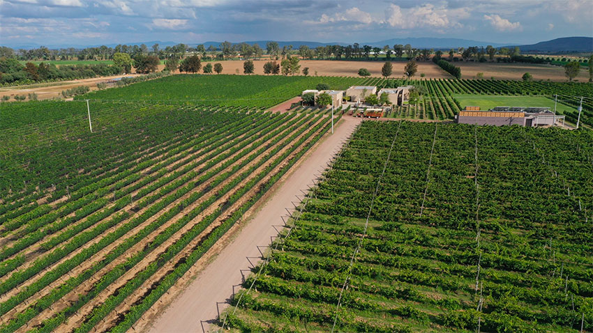 Where peppers once grew are now grapes at Cuna de Tierra.