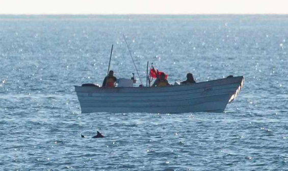 A vaquita porpoise swims alongside a boat fishing illegally in a restricted area.