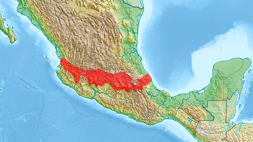 The Trans-Mexican Volcanic Belt has been more active in the past than previously thought.