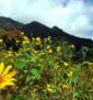 7—GR-wildflowers