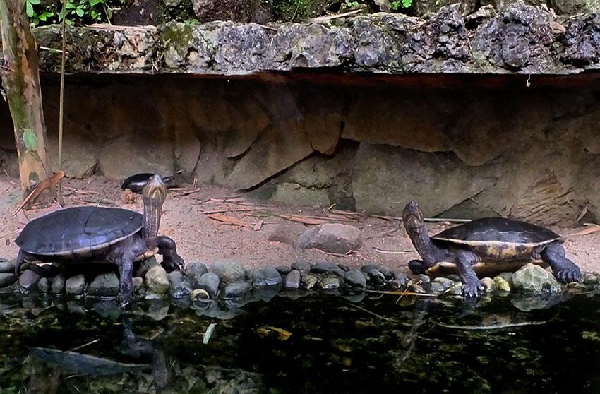 9—-sm2-Stuck-Up-Turtles