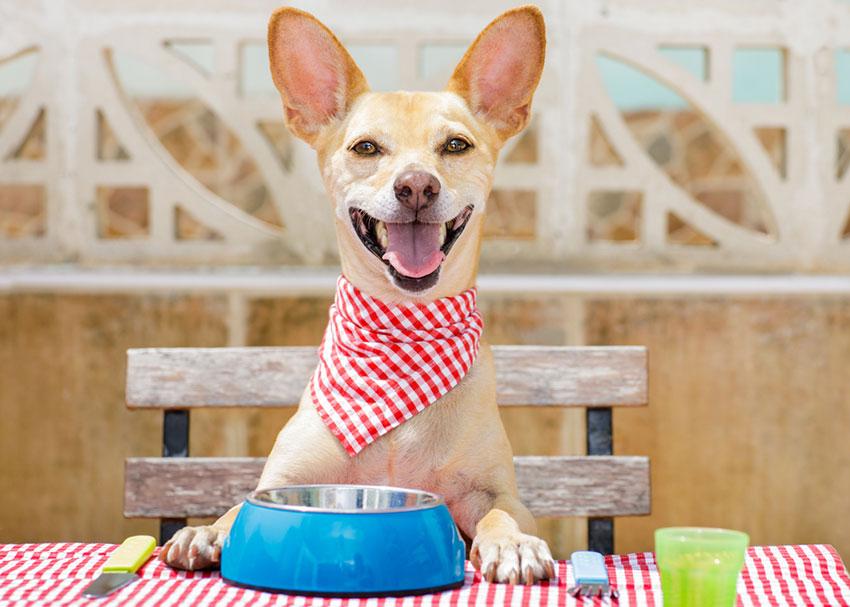 dog in restaurant