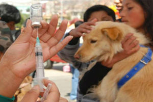 Mass vaccination campaigns part of strategy to counter rabies.
