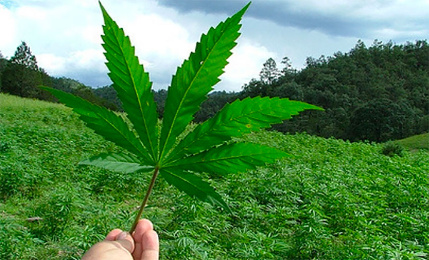 Legalizing marijuana is up for debate once again.