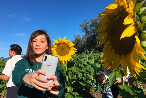 A visitor takes a selfie with Mocorito's sunflowers.
