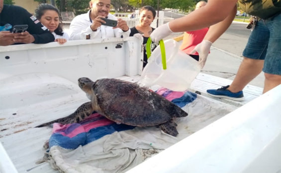 A sea turtle is rescued in Oaxaca.