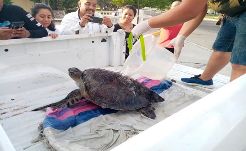 A sea turtle is rescued in Oaxaca.