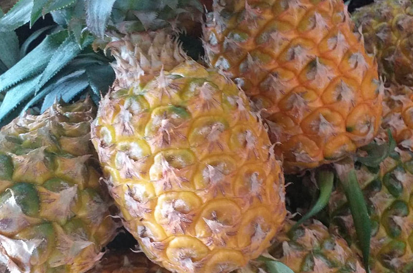 Honey pineapples are among the sweetest.