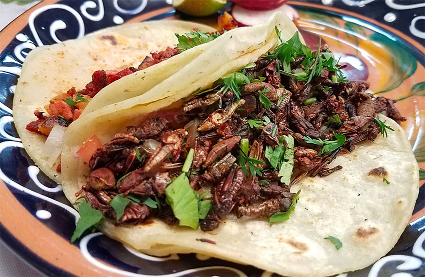 Tuck into some bugs in Mexico City.