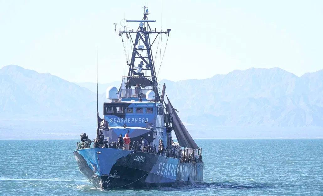 The Sea Shepherd vessel Sharpie.