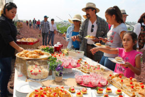 Two events will celebrate strawberries in the Guanajuato city.