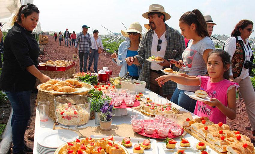 Two events will celebrate strawberries in the Guanajuato city.