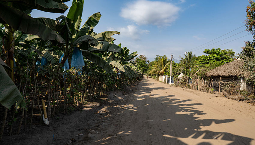 A banana plantation just outside Ciudad Hidalgo provides jobs to many asylum seekers.