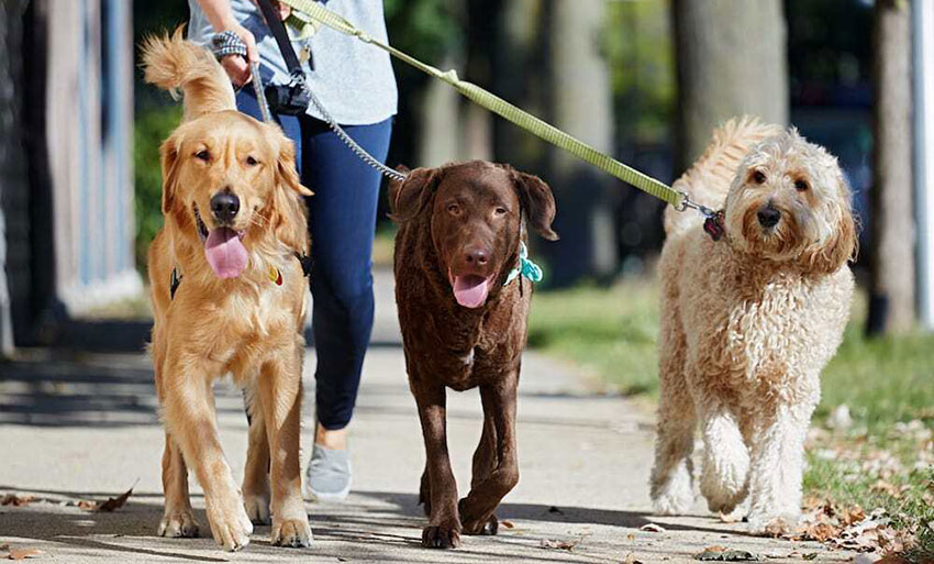 Dog-walkers are among workers hired by expats.