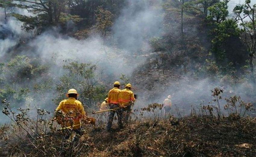 Firefighters at work in Oaxaca.