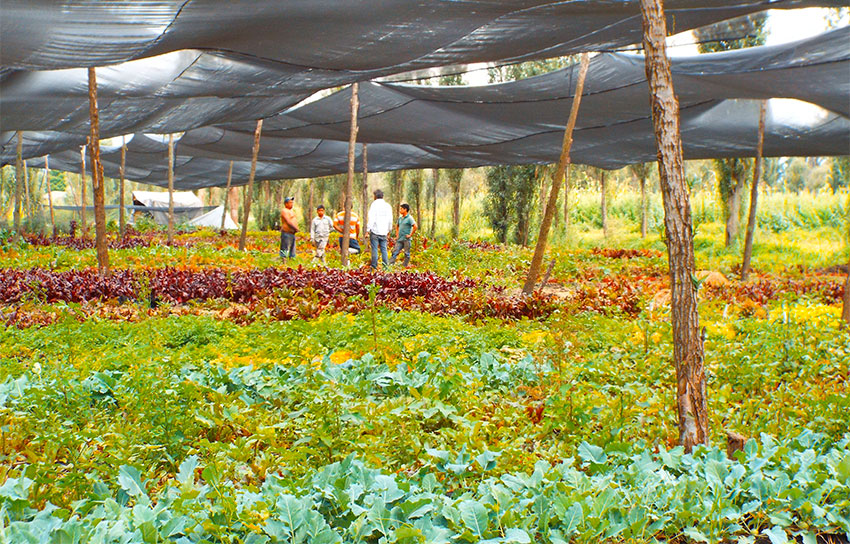 The Yolcan chinampa garden offers weekly produce deliveries.