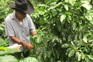 Salvador Esteban checks his coffee plants in Pluma Hidalgo.