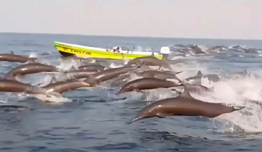 Dolphins off the coast of Oaxaca this week.