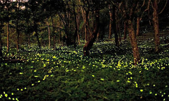 The fireflies are back.