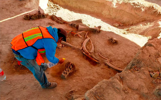 Mammoth bones are cleaned at the site of the new airport.