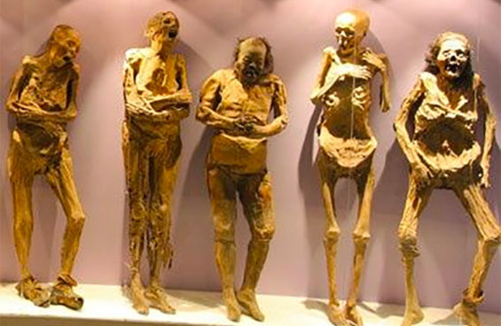 Some of the mummies of Guanajuato: not all are accounted for.