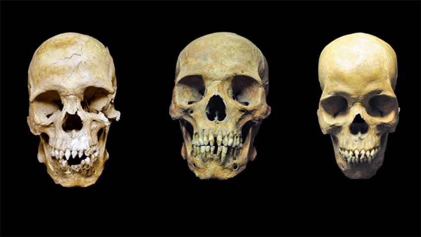 The skulls of the men buried in Mexico City whose bodies were found in the 1990s.