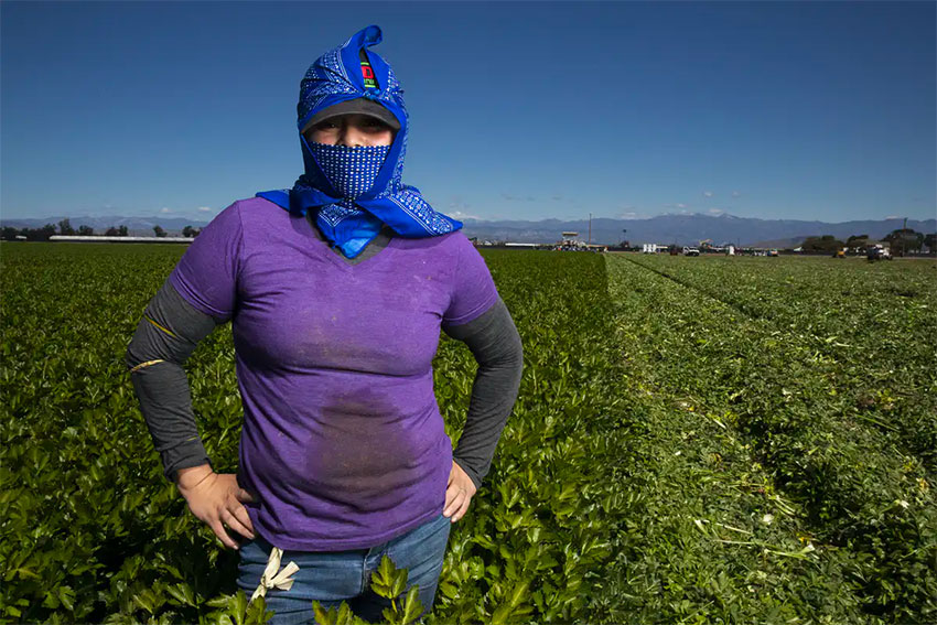 Juana González works 10 hours a day, six days a week alongside other agricultural workers to produce America's pandemic food supply.