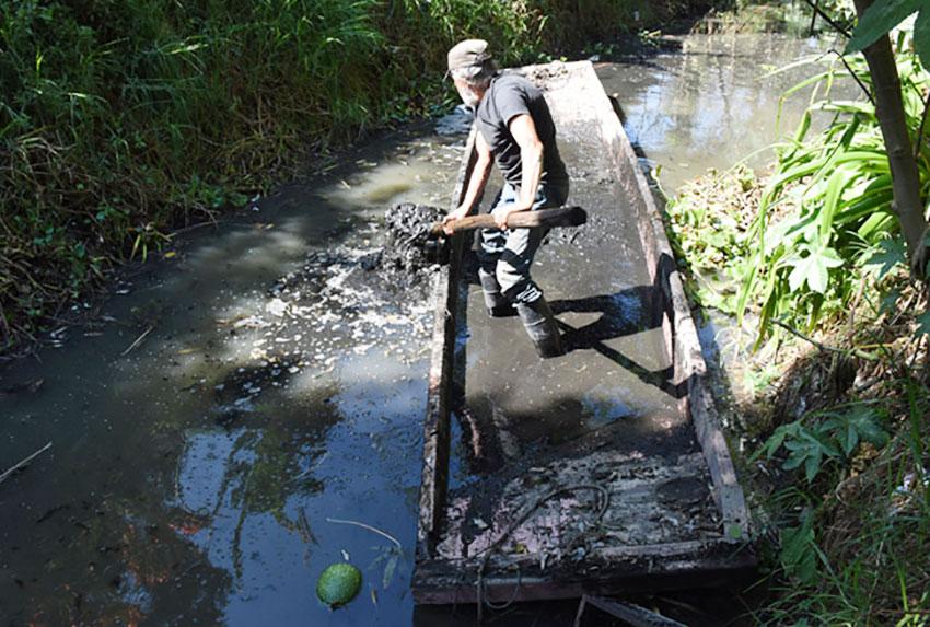 Martín Venagas dredges mud for planting.