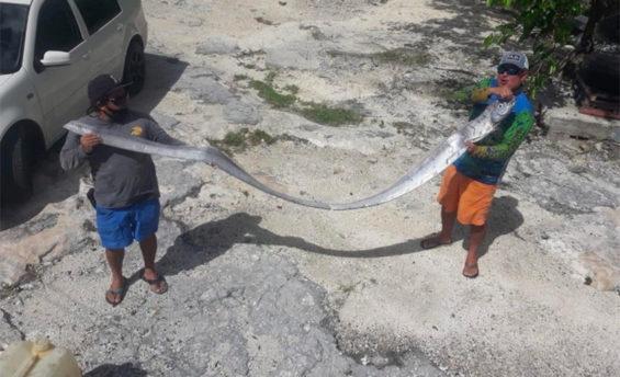 Cozumel fishermen with their oarfish.