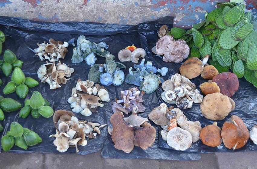 Setas para la venta en un mercado tradicional en Acaxochitlán, Hidalgo.