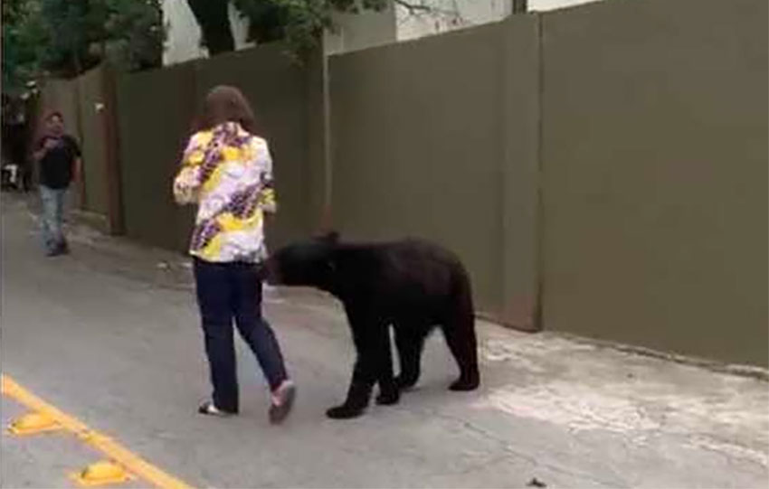 The bear that was captured in a video on Monday continues to show interest in humans.