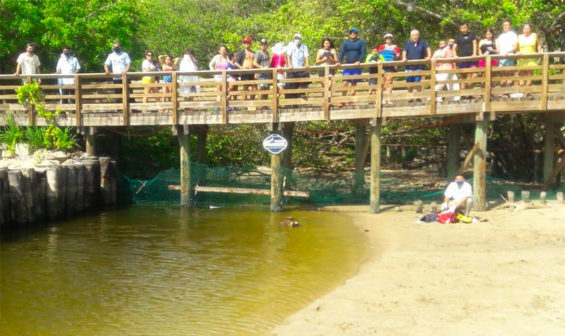Scene of the crocodile attack in Ixtapa.