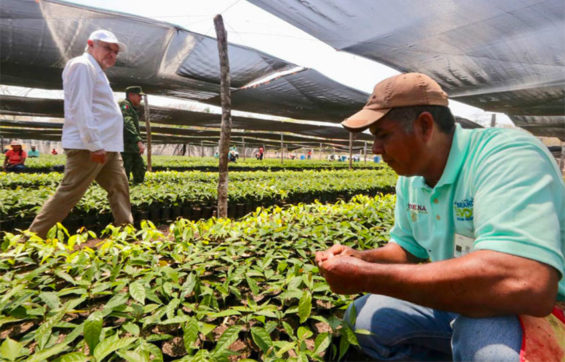President López Obrador tours a military tree nursery in Tabasco.