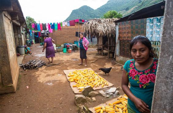 Corn dries in a yard in Santos Reyes Yucuná.