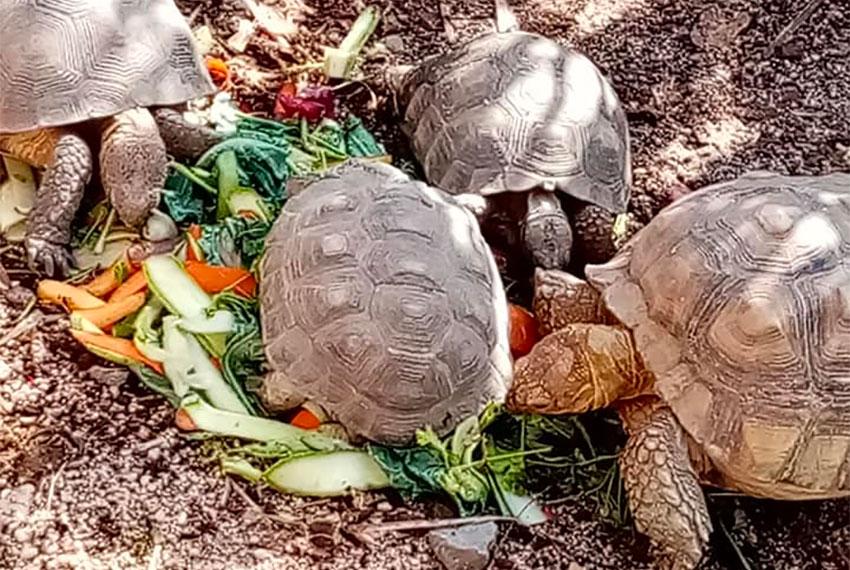 Turtles enjoy donated food at the Serpentario de La Paz.