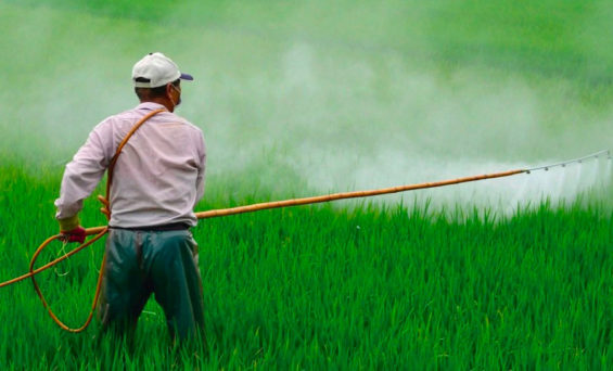 The Environment and Agricultural ministries have clashed over the use of a herbicide.