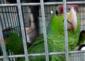 11——sm-tianguis-parrot