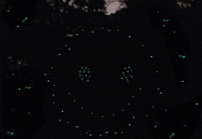 13—–k2-sm-Friendly-Fireflies